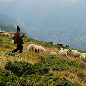 Pastoral Portrait by Daniel Guta - Novices Only Portraits & People ( sheep, pastoral, landscape, shepperd )