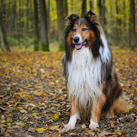 Autumn in the woods... by Blaž Ocvirk - Animals - Dogs Portraits