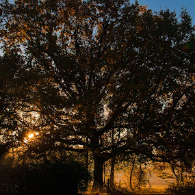 Autumn Sunrise by Michael Ripley - Nature Up Close Trees & Bushes ( nature, tree, autumn, sunrise, sun )