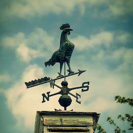 Old rooster weathervane by Janice Poole - Artistic Objects Antiques