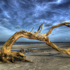 Wind Bent Driftwood by Greg Mimbs - Landscapes Cloud Formations ( water, clouds, sand, erosion, waves, driftwood beach, georgia, ocean, live oaks, sky, tree, time scars, jekyll island, barier island, , HDR, Landscapes, landscape, beach )