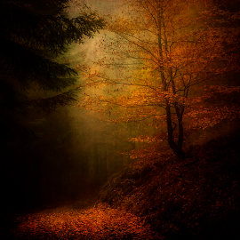 Autumn by Peter Samuelsson - Nature Up Close Trees & Bushes