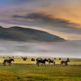 Horses at dawn by Roberto Melotti - Animals Horses ( clouds, hills, animals, roberto melotti, horses, grass, nikon d810, norcia, castelluccio, mountains, sky, dawn, fog, sunset, cloud, sunrise, castelluccio di norcia )