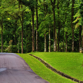 by Nyoman Gita Astadi - Landscapes Forests ( relax, tranquil, relaxing, tranquility,  )