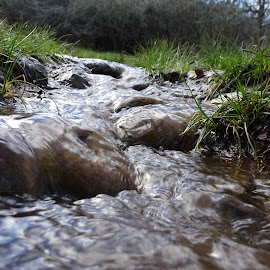 by Randy Young - Nature Up Close Water