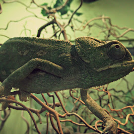 Wildlife by Nicola Bake - Novices Only Wildlife ( green, amphibian, wildlife, photography, animal )