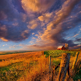 Heartland by Phil Koch - Landscapes Prairies, Meadows & Fields ( vertical, yellow, leaves, sky, nature, barn, tree, autumn, weather, perspective, light, orange, twilight, art, agriculture, horizon, portrait, dawn, serene, trees, lines, natural light, wisconsin, ray, landscape, phil koch, spring, sun, photography, farm, life, horizons, clouds, office, park, scenic, morning, silo, farming, shadows, field, red, blue, sunset, amber, meadow, crops, summer, beam, sunrise, garden )