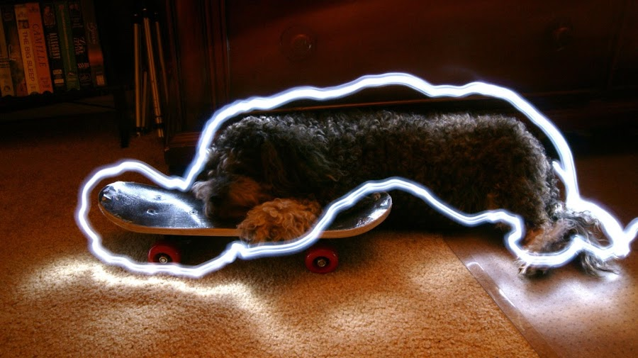 Vinny Painted with Light by Grace Castro - Animals - Dogs Portraits ( vinny, puppy, sleeping, dog, skateboard, painting, light )