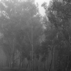 by Reinilda Sissons - Black & White Landscapes
