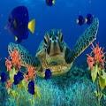 Coral Reef Aquarium Wallpaper APK for Ubuntu