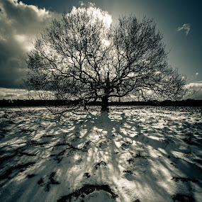 Shadows in the Snow by Peter Rollings - Landscapes Prairies, Meadows & Fields ( clouds, winter, tree, snow, lone, sun, shadows )