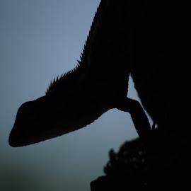by Vishal Choudhary - Animals Reptiles