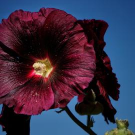by Todd Reynolds - Flowers Single Flower