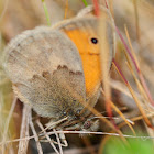 Small Heath; Níspola