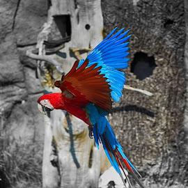 by Gosha L - Animals Birds