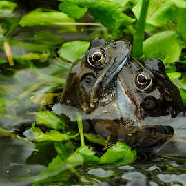 It must be Love.................... by Pat Somers - Animals Amphibians