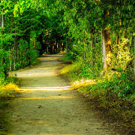 Path in the woods by Joe Grabo - Nature Up Close Leaves & Grasses ( wisconsin, nature, green, path, trees, woods, photography )
