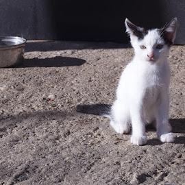 by Miranda Legović - Animals - Cats Kittens