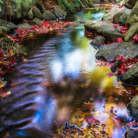 by Keith Sutherland - Nature Up Close Water