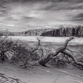 Selenium Winterscape by Michael Mounts - City,  Street & Park  City Parks ( winter, park, snow, lake )