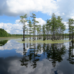 Swamp Reflections by Hal Gonzales - Landscapes Waterscapes ( pool, trees, weather, pond, swamp,  )