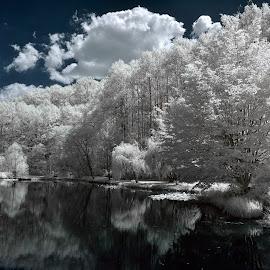 Winter in Summertime by Mark Schneider - Landscapes Forests ( nature, infrared, landscape photography, landscapes, landscape )