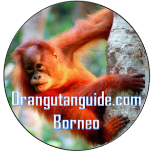Orangutan Guide Borneo for PC-Windows 7,8,10 and Mac