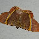 Silvery Phrygionis moth