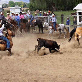 Team roping by Gaylord Mink - Sports & Fitness Rodeo/Bull Riding ( riders, calf, spectators, rodeo, ropes )