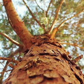 tree by Cràzzy Giirl - Uncategorized All Uncategorized ( trunk, wooden, wood, tree )