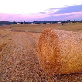 Hay Rolls by Bob Applegate - Landscapes Prairies, Meadows & Fields ( farm, hay, summer, harvest, agricultural )