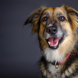 My boy by Phil Anderson - Animals - Dogs Portraits ( studio, fujifilm, dog, profoto, portrait )