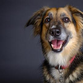 My boy by Phil Anderson - Animals - Dogs Portraits ( studio, fujifilm, dog, profoto, portrait )