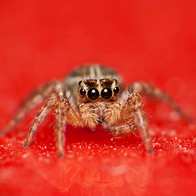 Toothpick-ing by Nadzli Azlan - Animals Insects & Spiders