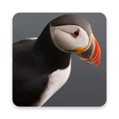 Puffin Wallpapers icon