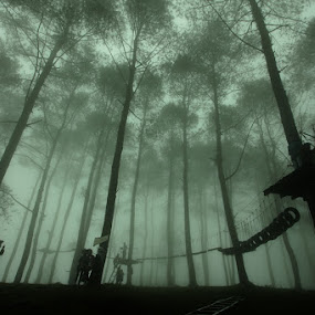 The fog of poetry  by Bob  Matkodak - Landscapes Forests ( lens 17-40 mm, canon eos 5d mark ii, color, colors, landscape, portrait, object, filter forge, , Selfie, self shot, self portrait )
