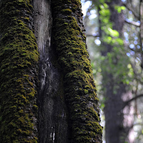 Bark tree with moss by Cristobal Garciaferro Rubio - Nature Up Close Trees & Bushes ( bark, moss, leaves, branches, gree )