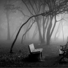 Misty morning by Amjad Ca - City,  Street & Park  Historic Districts