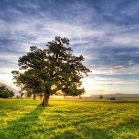 The Tree by Bruce Nolan - Landscapes Prairies, Meadows & Fields ( landscape, bruce nolan, photography, new zealand )