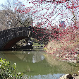 CENTRAL PARK NEW YORK by Ramade Genevieve - City,  Street & Park  City Parks (  )