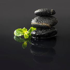 zen rocks by Marianna Armata - Nature Up Close Rock & Stone ( water, studio, drop, green, mint, pebbles, sprig, marianna armata, fresh, droplet, herb, zen, wet, rocks, black )