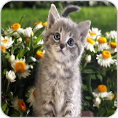 Download Kittens APK on PC