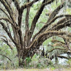 Trail beauty by Muthukumaran Arumugam - Nature Up Close Trees & Bushes ( nature, green, beautiful, trail, bush )