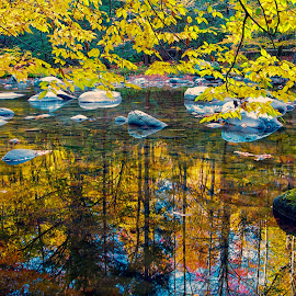 Under the Leaves by Carol Ward - Landscapes Waterscapes ( tn, fall colors, autumn, great smoky mountains national park, reflections, trees, leaves, rocks, smoky mountains )