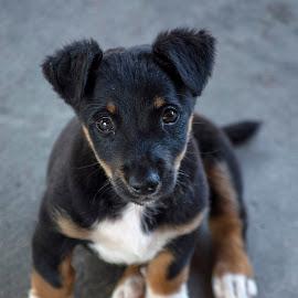 by Томислав Лукић - Animals - Dogs Puppies ( outdoor )