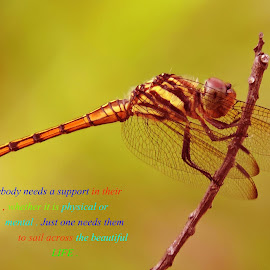Dragonfly by SANGEETA MENA  - Typography Quotes & Sentences