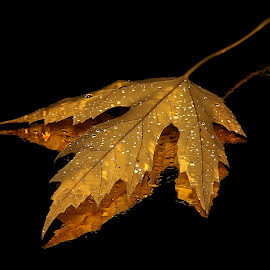 by Todd Klingler - Nature Up Close Leaves & Grasses