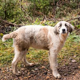 piciul by Constantinescu Adrian Radu - Animals - Dogs Portraits
