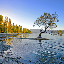 Not Lonely by Winkie Chau - Landscapes Travel ( tree, autumn, sunset, lake, lonley,  )