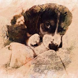 by Brook Kornegay - Digital Art Animals